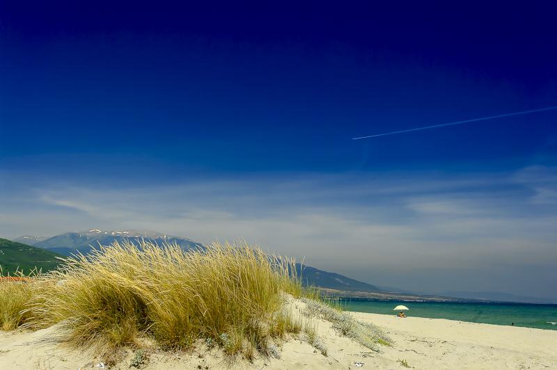 sand dunes olympic beach