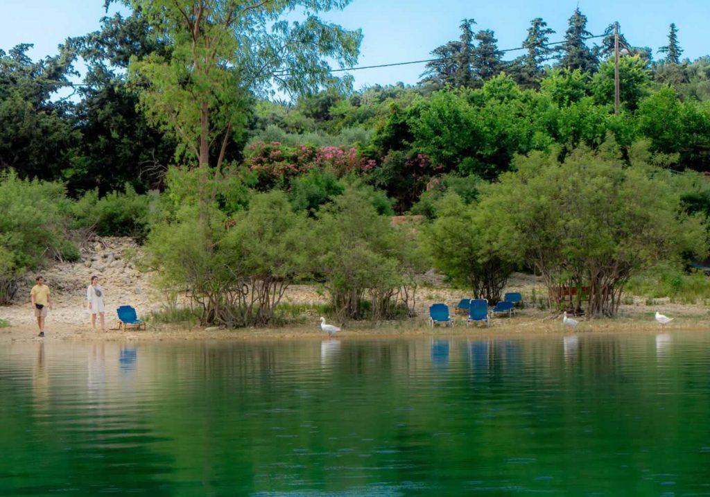Kournas Lake Geese