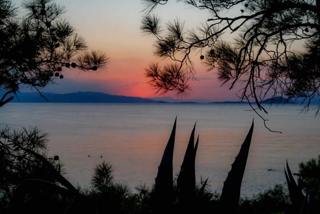 aegina pines-plants sunset