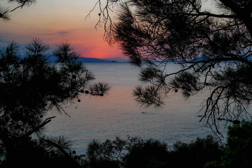 aegina pines sunset