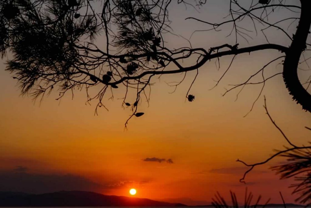 aegina sunset pine cones