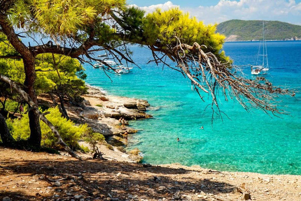 Greek island pine trees