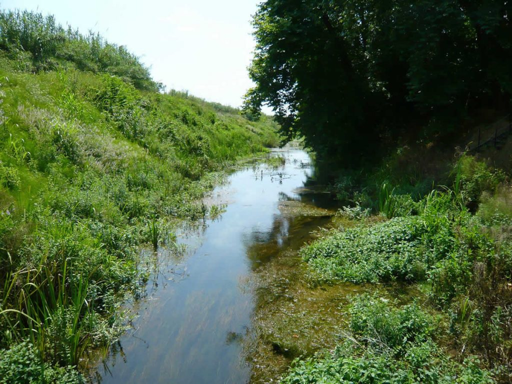 Dion creek