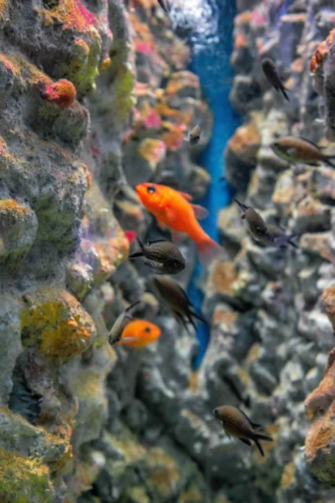 Cretaquarium Crete colorful fish