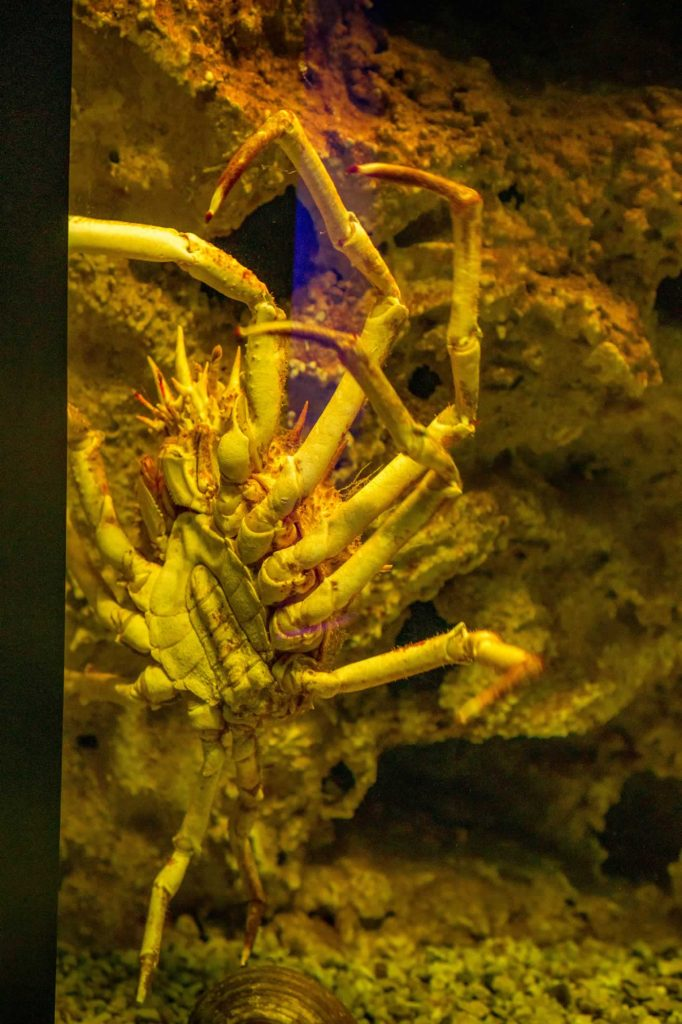 cretaquarium crab