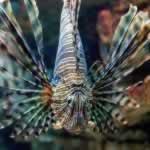 Cretaquarium Heraklion devil fish