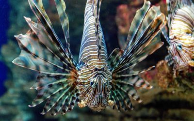 Cretaquarium Thalassokosmos – Visiting Guide for 2021