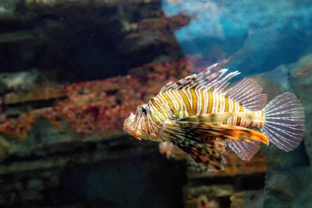cretaquarium devil fish