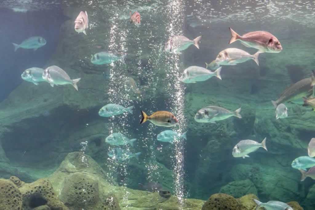 cretaquarium plenty of fish