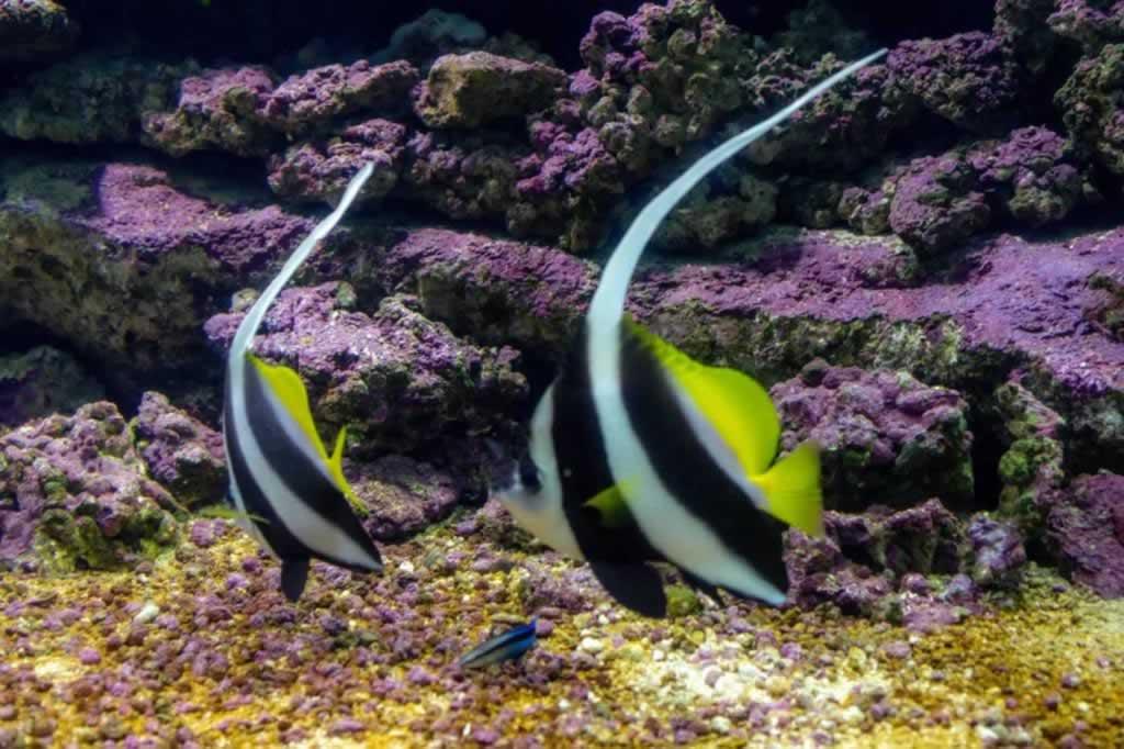 Zebra Fish Cretaquarium Heraklion
