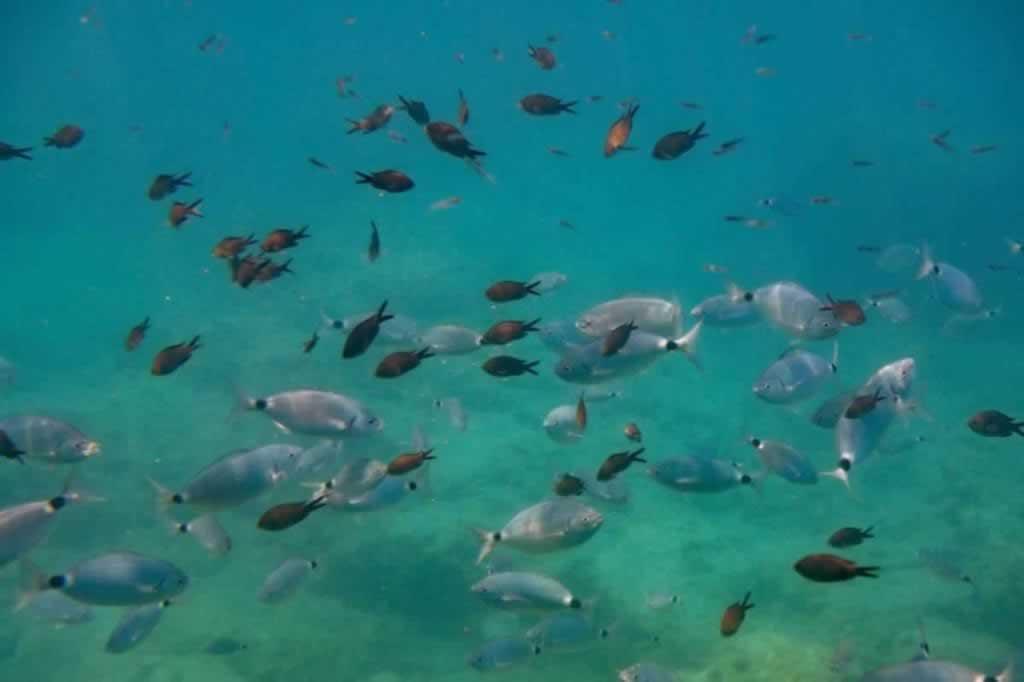 rhodes poseidon submarine fish