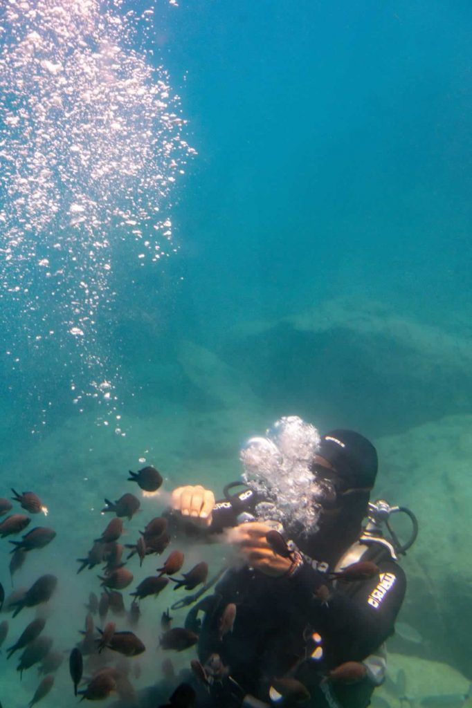 rhodes poseidon submarine fish diver