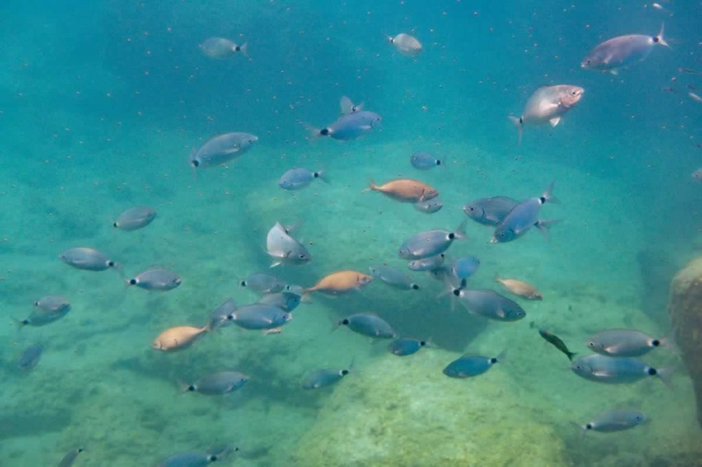 rhodes town boat trip fish
