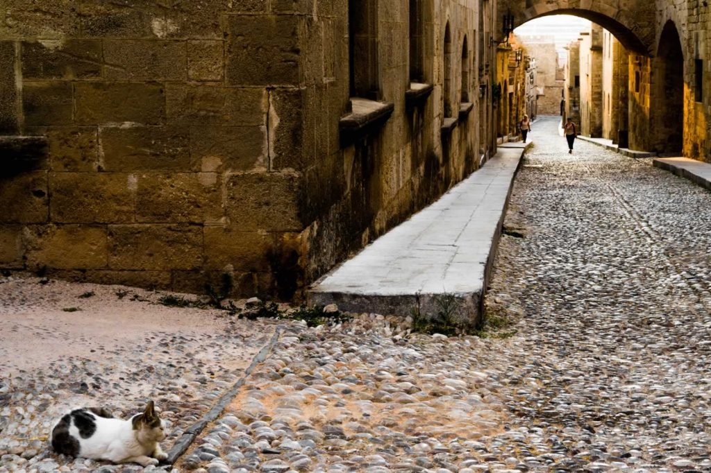 Cat on the Street of the Knights in Rhodes