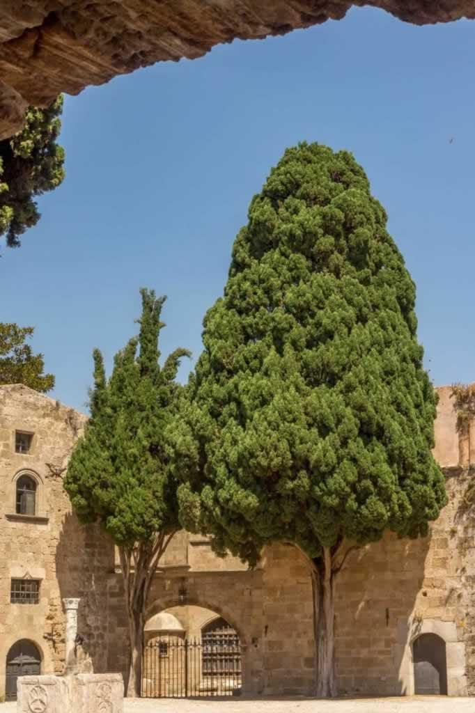 huge cyprress Rhodes fortified walls
