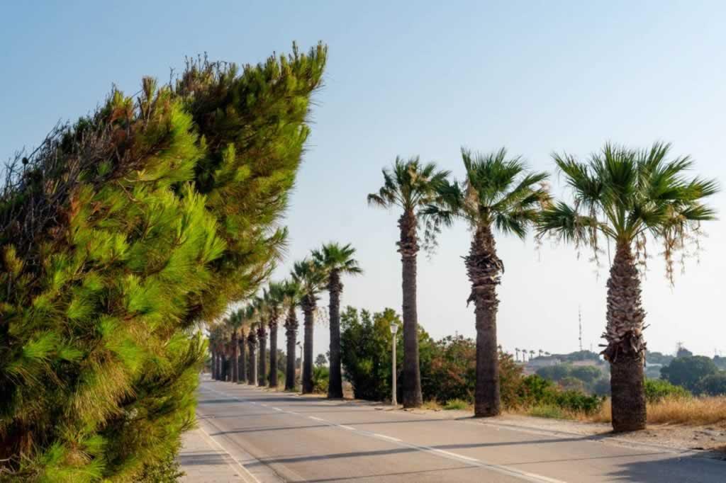 Bent trees on Monte Smith Rhodes