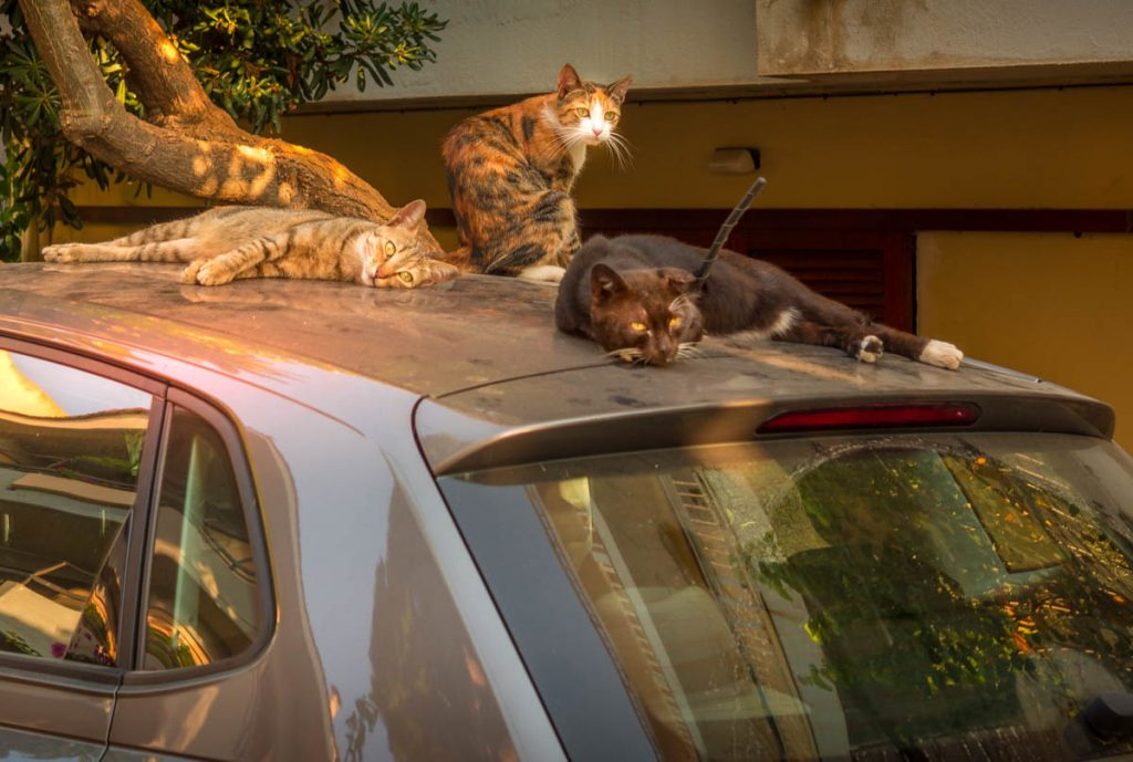Three cats on a car in Rhodes